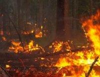 Несчастный случай на отдыхе. Лесной пожар